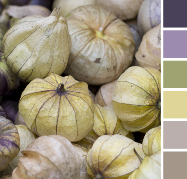 color fruits and vegetables with matching paint color swatches